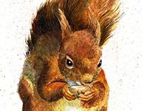 Squirrels...An Update