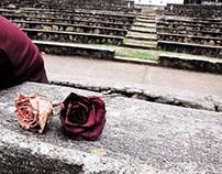 Winter's Rose Garden