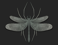 Spiderfly Wallpaper for Android