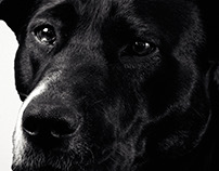 Pet Photography [Dogs]