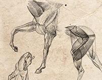 Horses sketches for comics