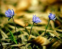 selected photos - nature