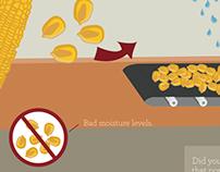Life Cycle of Popcorn
