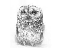 Owls part 2