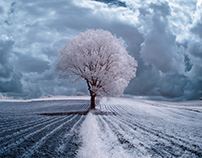 The Trees. Infrared photography. Poland