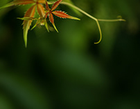 In Green.  Nature Photography