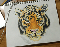 Tiger drawing in process