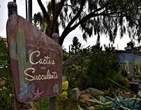 Cactus & Succulent Shop - Encinitas, CA