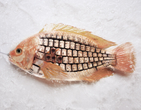 The Keyboard Fish
