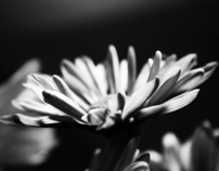 Colorless Flowers