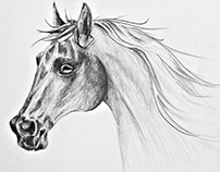 pencil drawings - animals