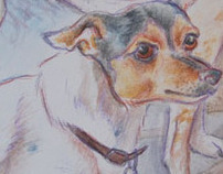 Jack Russel Terrier and Rat Terrier