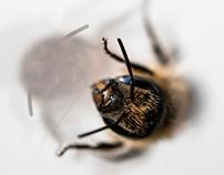 bee buzz buzz buzz