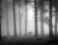 Reportaje caballos en la niebla