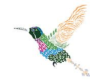 Abstract Hummingbird ~ Garnet-throated Var