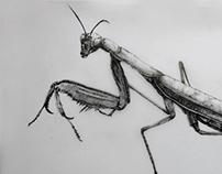 Ilustrações Ciêntificas