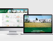 SITIO WEB | CASAS TRIO