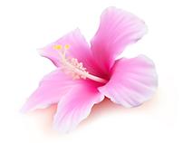 Gradient mesh hibiscus flower