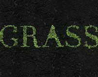 growing type - grass // 2013