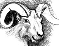 Drawing animals - studies