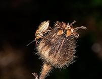 Bug... (single shot)