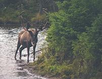 Phase 2: The Modern Moose Brand Identity Development