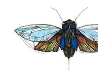 Blue Cicada