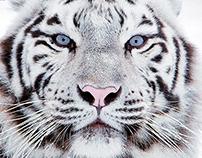 Sóstó Zoo | Website