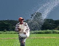 Registro fotográfico - Siembra de arroz - Guárico, Vzla