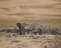 infrared elephant