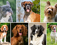 Choosing the Perfect Dog Breed for You and Your Family