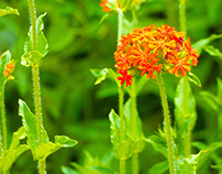 Photographs - Orange Flowers