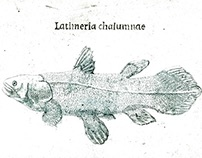 West Indian Ocean coelacanth (Latimeria chalumnae)