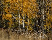Fall Colors Brockway Summit