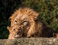 Liebe in der Tierwelt / Love in wildlife