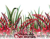 Watercolor crocosmia collection