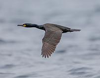 Birds Collection 35