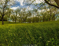 Rolling Hills and Pecan Trees