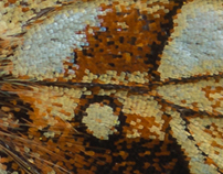 Photo Series: Nature / Case 10: Lepidoptera