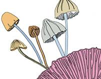Giving mushrooms a go...