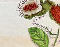Curso de medicina herbal. Jardín Botánico.