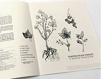 / Currant Exchange Botanical Brochure