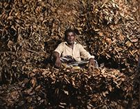 The Raw Gold of Sri Lanka: Cinnamon