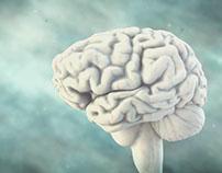 Canal Encuentro | El Cerebro y Yo
