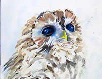 Portrait of the Tawny owl