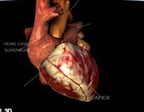 3D anatomic viewer