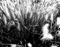 Flesh is grass II