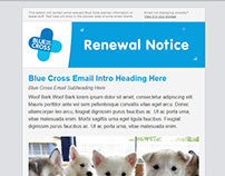 Responsive Email Template