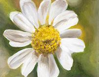 """""""Summer Daisy"""" Acrylic Painting 20 x 20 cm´s"""