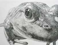 牛蛙日记/Bullfrog diary